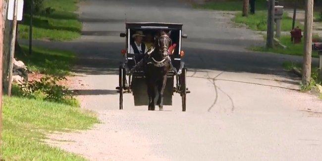 Амиши запустили собственный Uber. С лошадью и каретой
